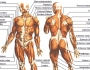 Bio Anatomy: The ITBand